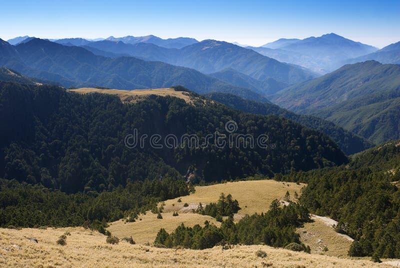 высокогорная трава стоковое изображение rf