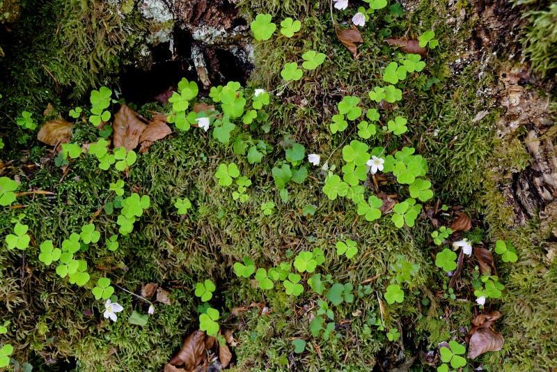 Высокогорное topview пола леса стоковое фото rf