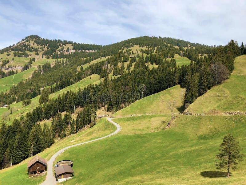 Высокогорные выгоны и луга на наклонах между озером Люцерн и пиком Gersauerstock или Vitznauerstock стоковое изображение