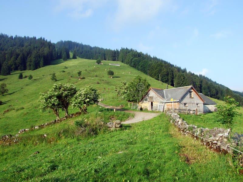 Высокогорные фермы и конюшни поголовья на наклонах горной цепи Churfirsten в регионе Toggenburg стоковое фото rf