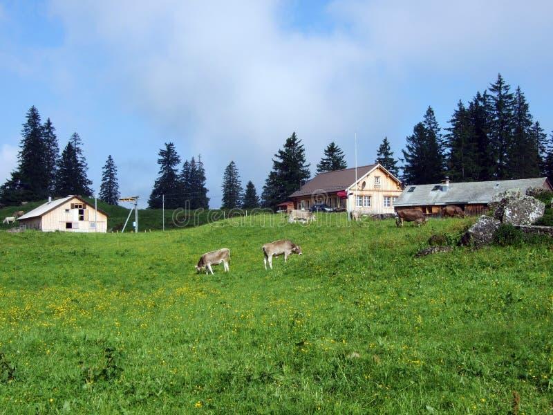 Высокогорные фермы и конюшни поголовья на наклонах горной цепи Churfirsten в регионе Toggenburg стоковое изображение