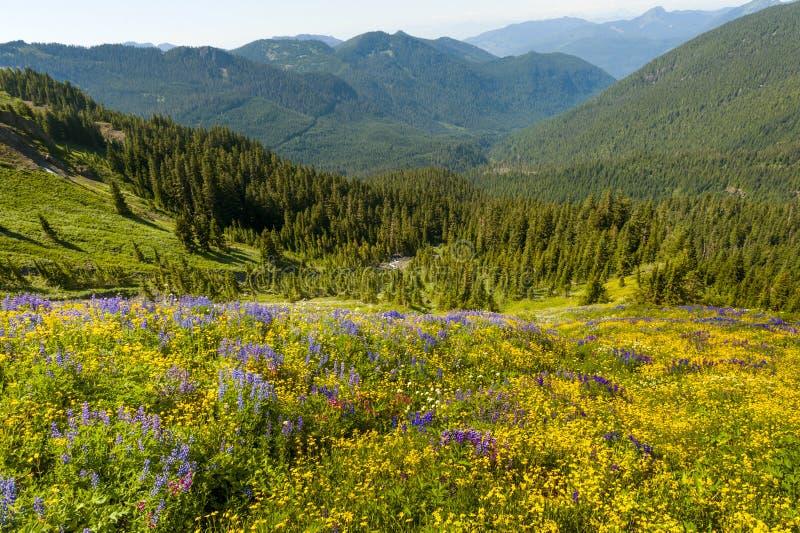 высокогорные wildflowers стоковая фотография rf