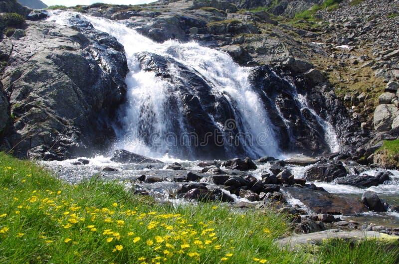 высокогорный водопад стоковое фото