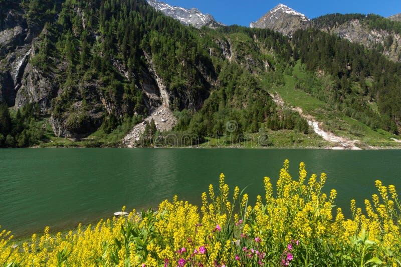 Высокогорный ландшафт лета весны озера с желтыми цветками в переднем плане стоковые изображения rf