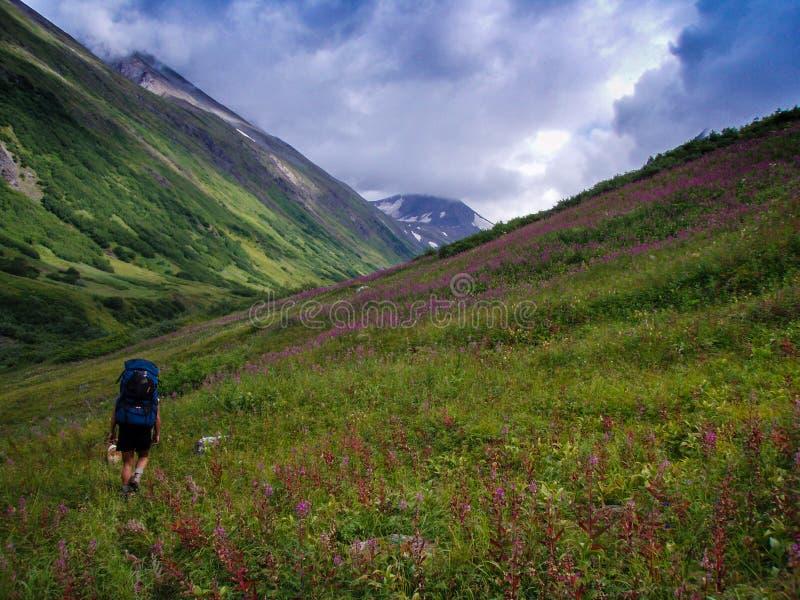 Высокогорный пеший туризм в Аляске стоковое фото rf