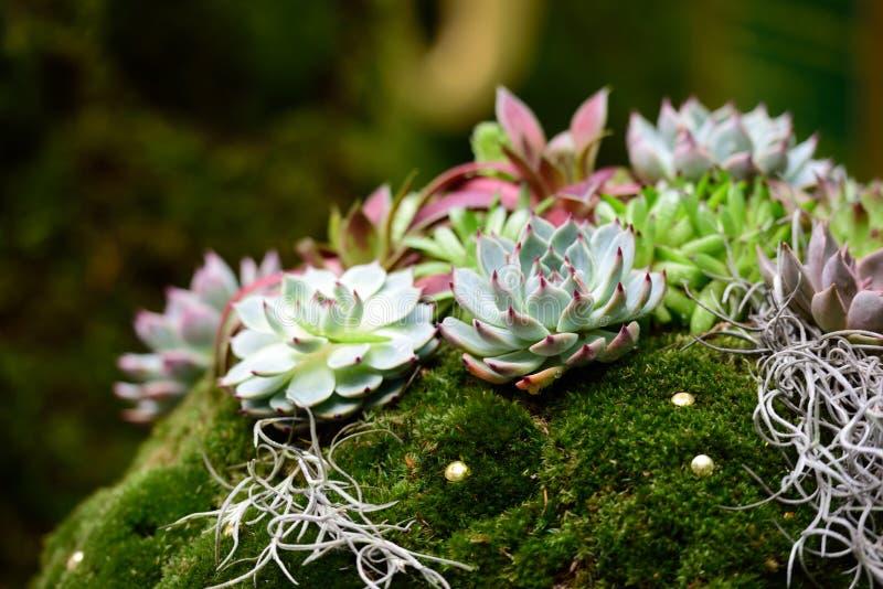 Высокогорный сад с succulents и мхом стоковое фото rf