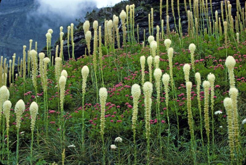 высокогорный туман цветков стоковые изображения