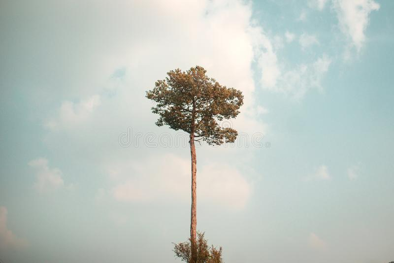Высокое дерево высочено стоковое фото rf