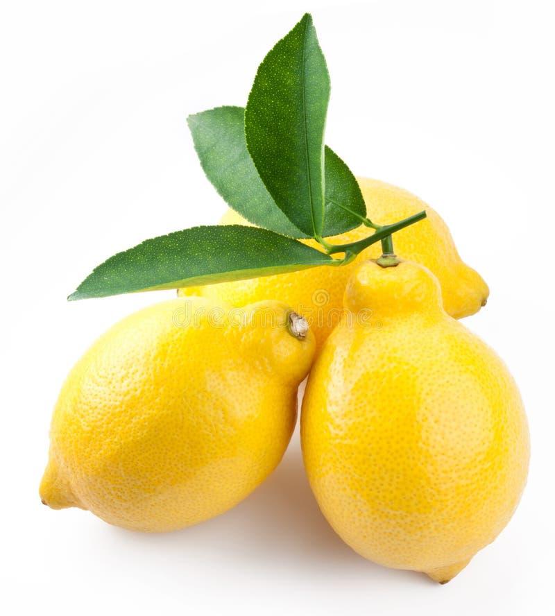 высокое качество фото лимонов зрелое стоковая фотография
