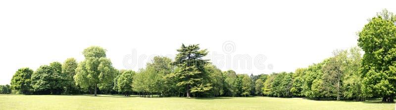 Высокое определение Treeline изолированное на белой предпосылке стоковое фото rf