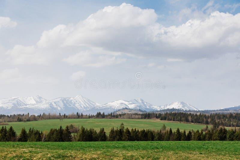 Высокое Tatras во время весны Луг с деревом в переднем плане стоковые изображения rf