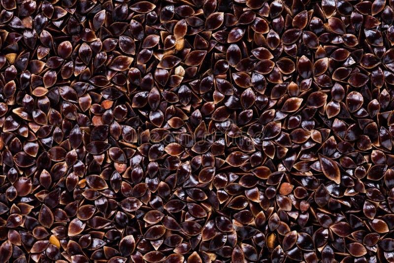 Высококачественные семена щавеля, в форме текстуры для вашего личного зеленого сада Смогите быть использовано семенем стоковое фото rf
