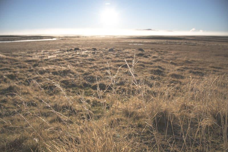 Высокорослая трава покрытая с росой на восходе солнца Трава луга в sepia внутри стоковая фотография
