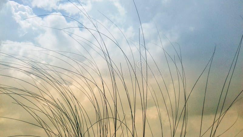Высокорослая трава с предпосылкой облачного неба стоковое изображение rf