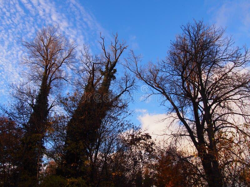 Высокорослые деревья осени стоковая фотография rf