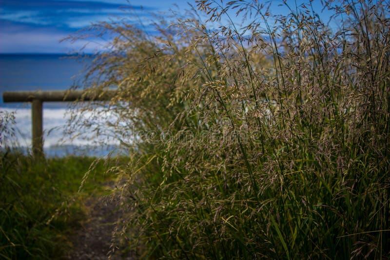 Высокорослая трава около бдительности над Тихим океаном в накидке Perpetua, Орегоне стоковая фотография rf