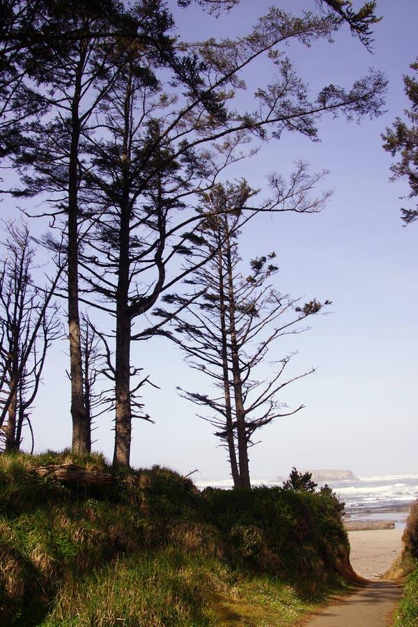 Download Высокорослые хвои вдоль прибрежных холмов Стоковое Фото - изображение насчитывающей утес, холм: 40589934