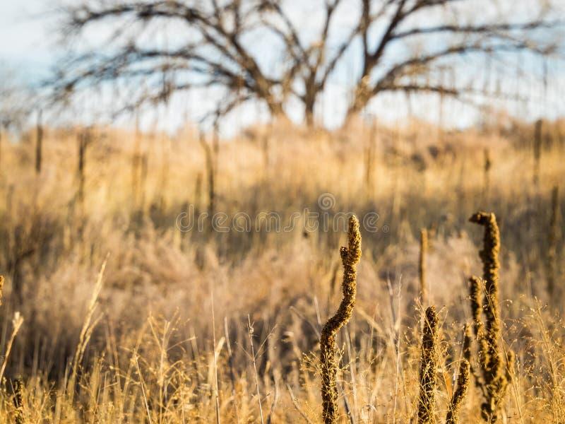 Высокорослые черенок семени среди трав прерии стоковое изображение rf