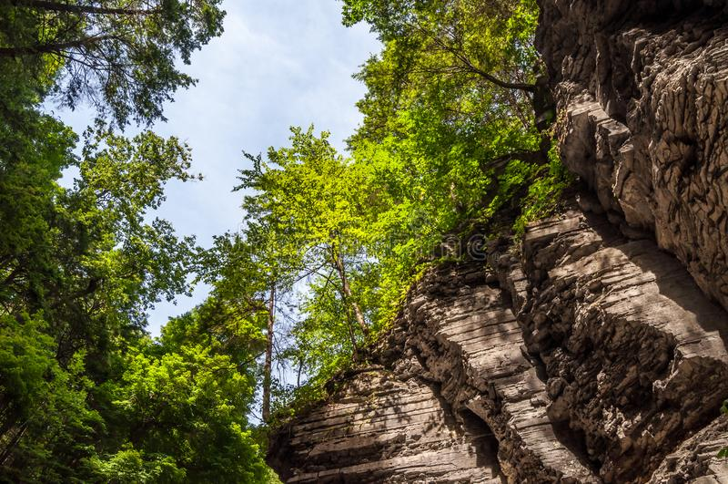 Высоты леса в Роберт h Парк штата Treman стоковые фото