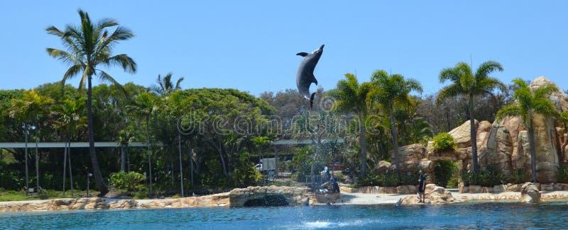Выставка дельфина в мире Gold Coast Австралии моря стоковое изображение rf