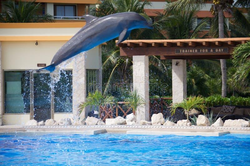 Выставка дельфина стоковое фото