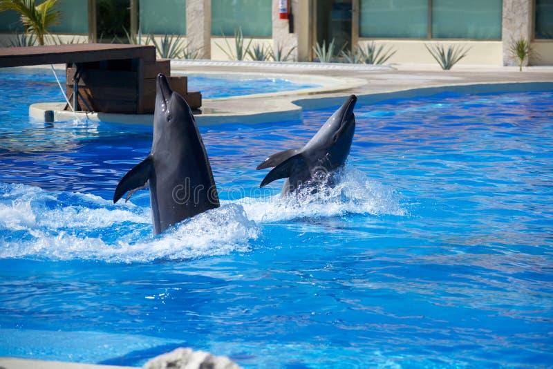 Выставка дельфина стоковая фотография rf
