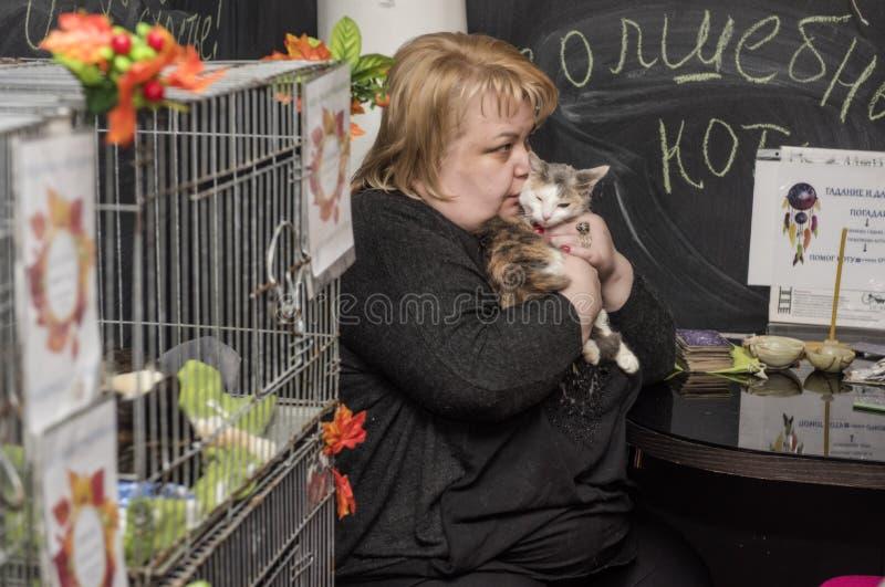 Выставка и распределение котов от укрытия стоковая фотография rf