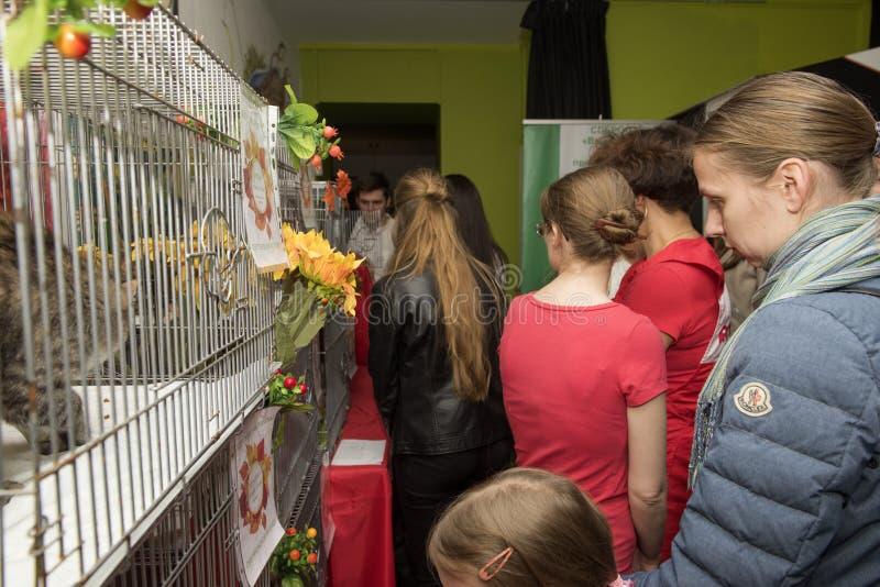 Выставка и распределение котов от укрытия стоковые фотографии rf