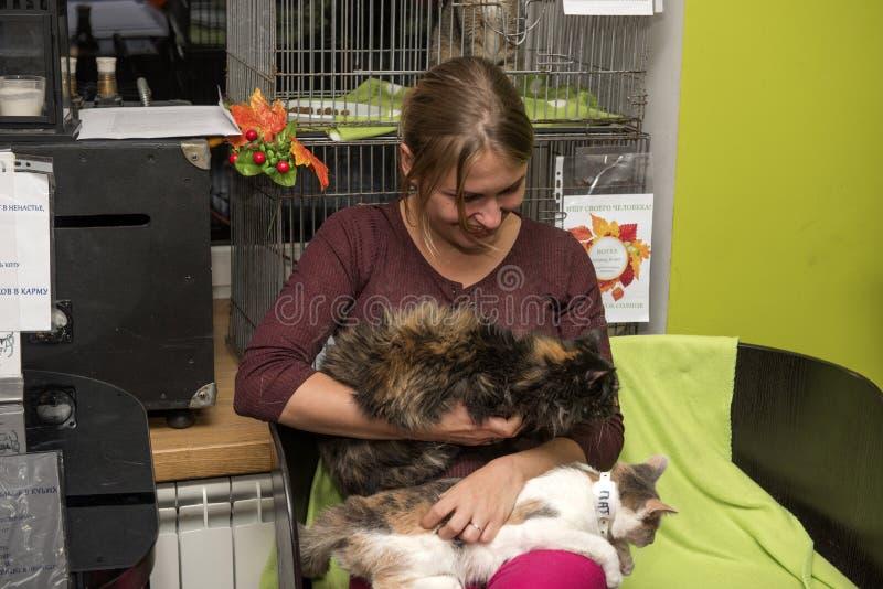 Выставка и распределение котов от укрытия стоковое изображение