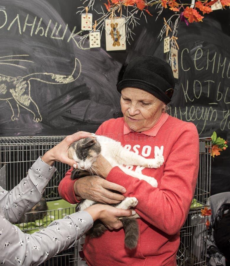 Выставка и распределение котов от укрытия стоковое фото