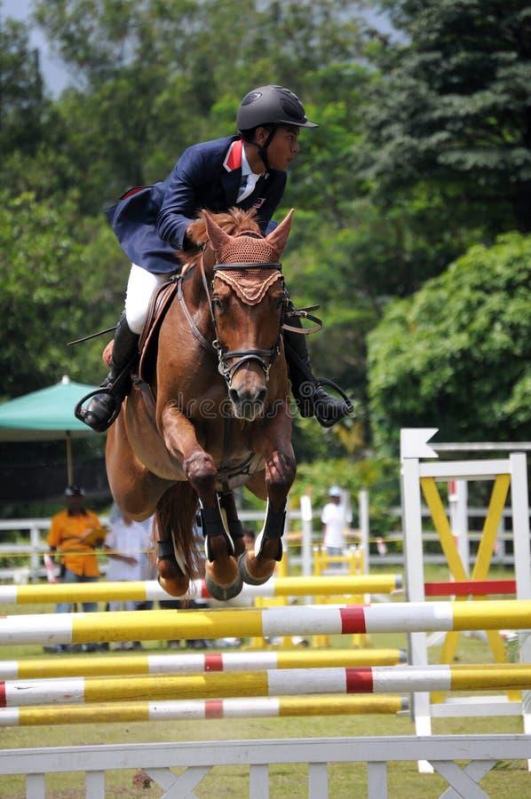 выставка лошади gallop 2011 стоковая фотография rf