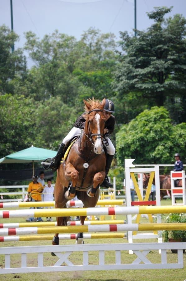 выставка лошади gallop 2011 стоковые изображения