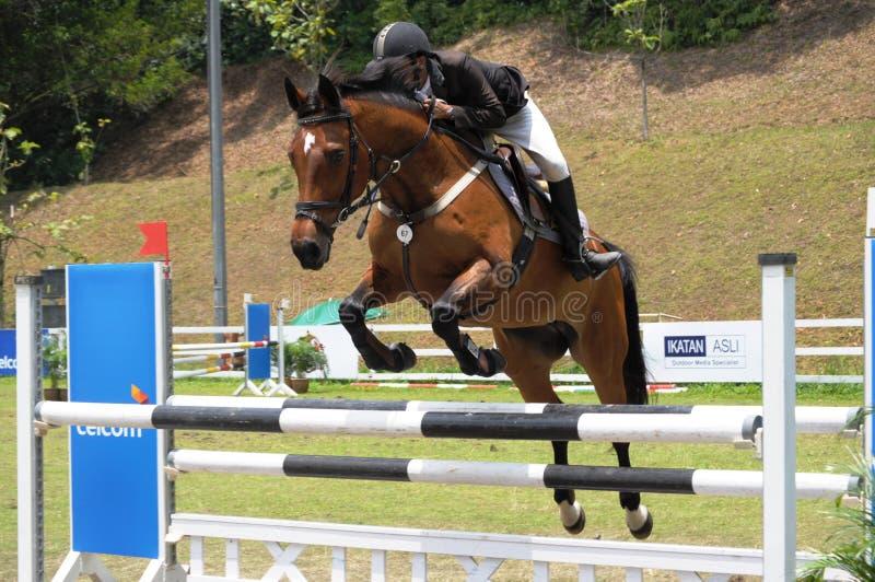 выставка лошади gallop 2011 стоковое фото rf