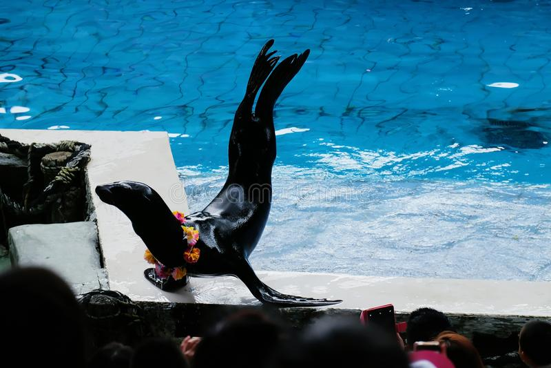 Выставка морсого льва на аквариуме стоковые фото