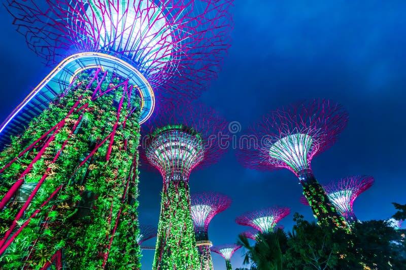 Выставка света ночи на Supertree Groveis в Сингапуре стоковая фотография rf