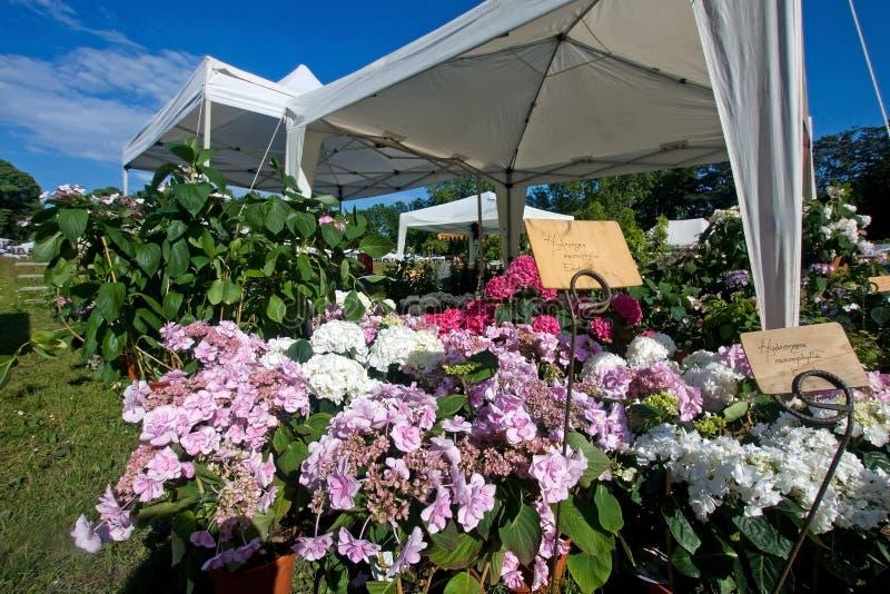 выставка цветка стоковое фото rf