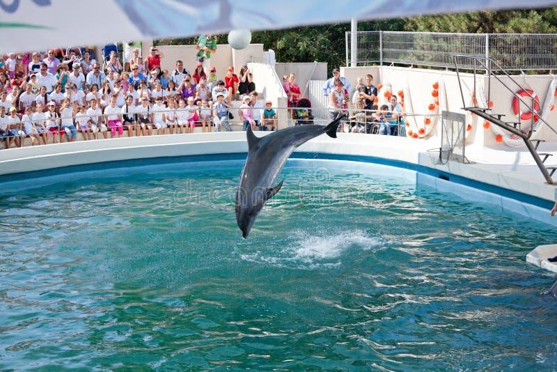выставка dolphinarium стоковые изображения rf