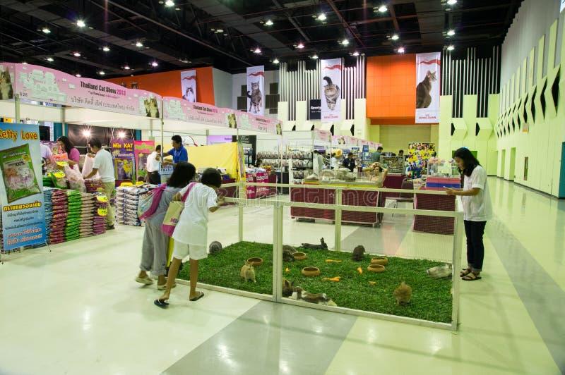 Выставка 2013,13th кота Таиланда. стоковое изображение