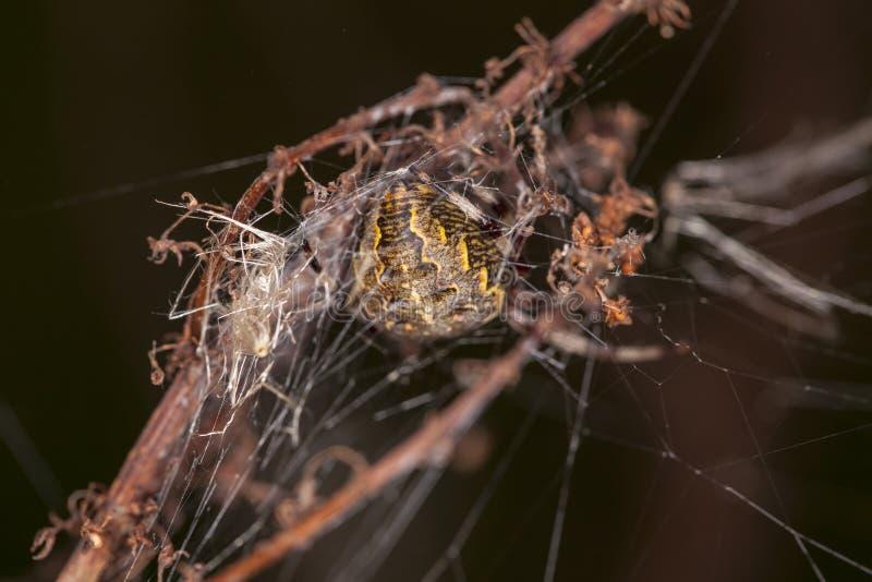 Выступает от задней части логова ` s паука стоковые фотографии rf
