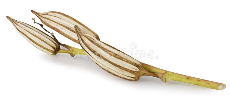Высушенная бамия изолированная на белой предпосылке стоковая фотография