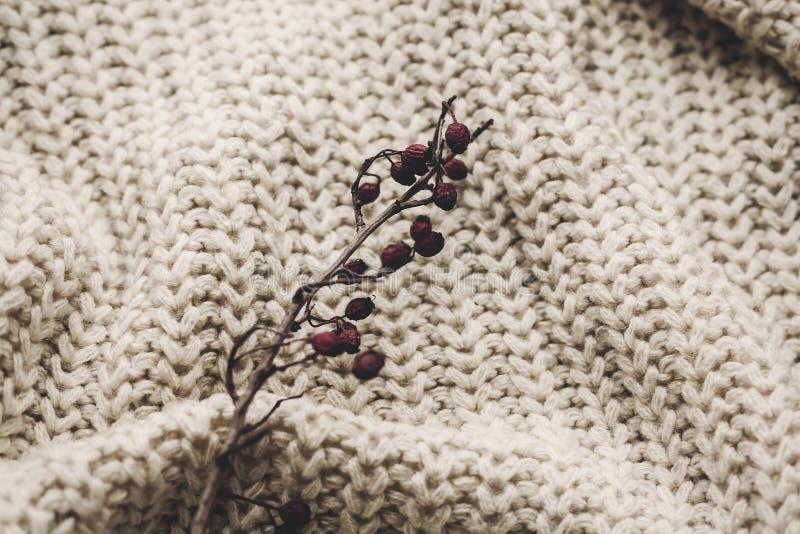 Высушенная ветвь боярышника на уютном греет связанный свитер, космос для te стоковые фотографии rf