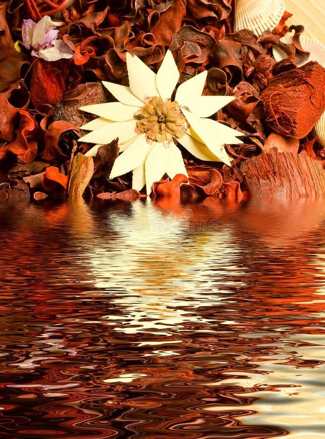 высушенная вода трав цветков стоковая фотография