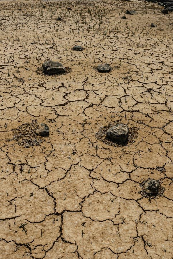 Высушенная земля с мертвым seashell вокруг утесов стоковое изображение rf