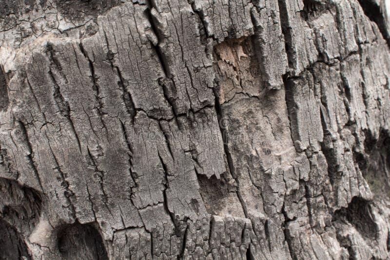 Высушенная кора дерева стоковая фотография rf