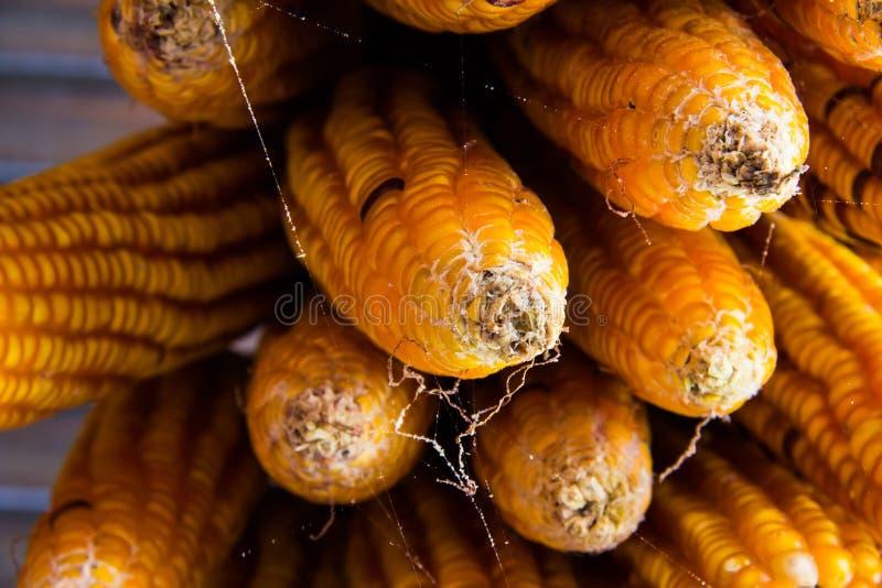 высушенная мозоль стоковое фото
