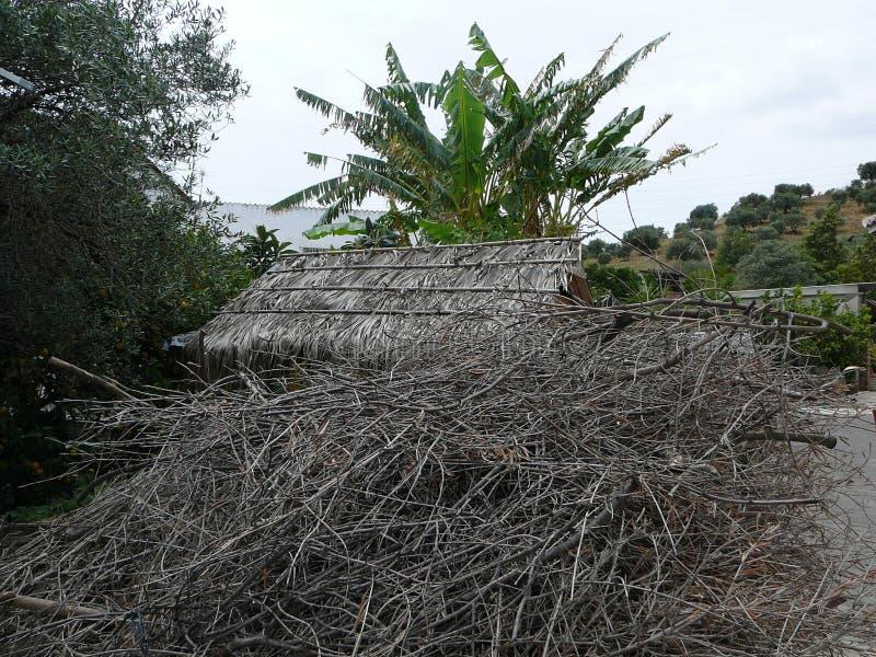 Высушенная разжигать древесина стоковое фото rf