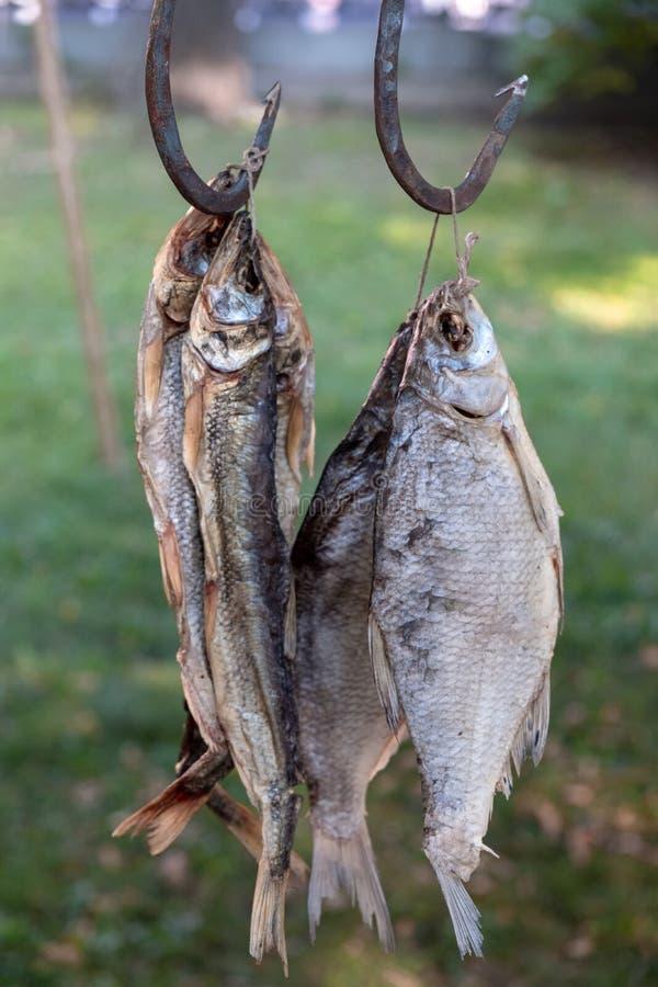 Высушенная смертная казнь через повешение рыб на крюках стоковое фото rf