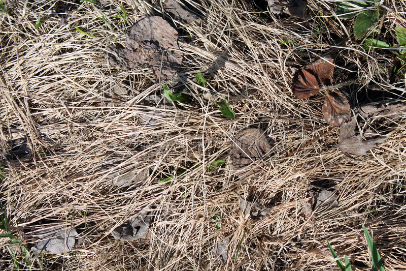 Высушенная трава стоковое изображение