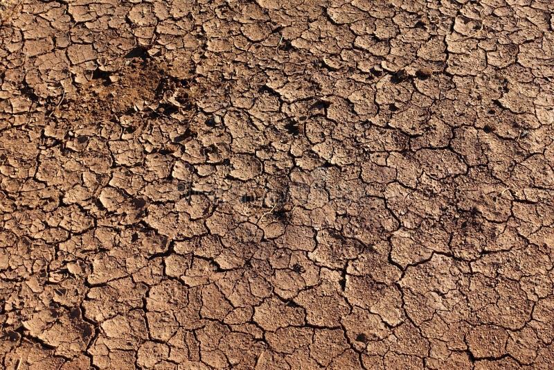 Высушенная треснутая земля стоковые фото