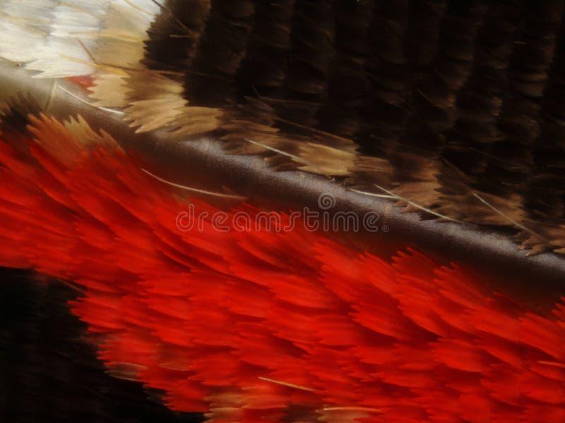 высушенное бабочками крыло маштабов стоковое изображение rf